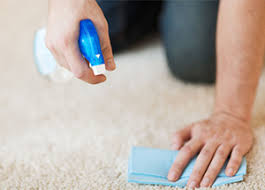carpet cleaning service carpet care