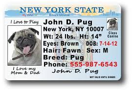 York New York Drivers License York New Drivers New License New License Drivers