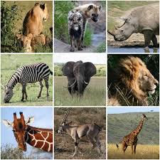 Animales del Africa