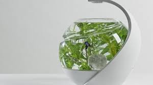 Fish Tank Avo The Self Cleaning Tropical Fish Tank By Susan Shelley Noux