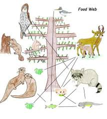 web drawing drawing food webs with own animal art