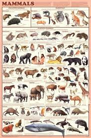 Amazon Com Laminated Mammals Educational Animal Chart
