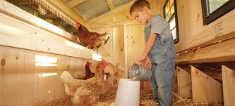 Our stylish chicken coops are packed with features to make feeding and egg  collection easy