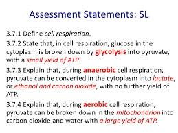 cellular respiration topic 3 7 and 3 8 2 sment