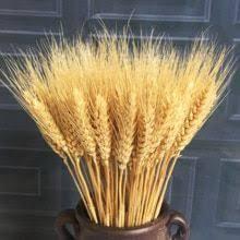 Натуральный пшеницы <b>Сухоцвет</b> букетик открытие ячменя DIY ...