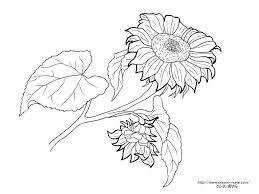 ケイトグリーナウエイの向日葵の挿絵の塗り絵の下絵画像