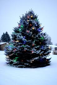 Outside Trees With Lights Outdoor Christmas Tree With Lights And Snow Picture