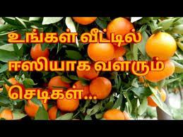 terrace gardening tips in tamil