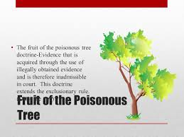 Selfincrimination And The Fruit Of The Poisonous Tree The Cadder Fruit Of Poisonous Tree Doctrine Definition