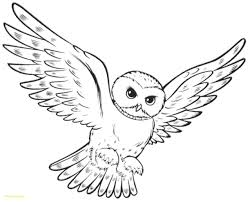 Coloring Pages Of Owls For Kids Elegant Owl Color Page Free Download
