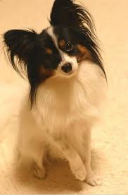 dog breed selectors