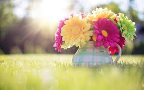 Spring Wallpapers - Top Free Spring ...
