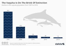 Extinction Timeline Chart Chart The Vaquita Is On The Brink Of Extinction Statista