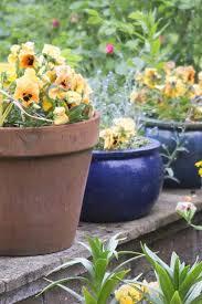 low maintenance garden pot plants