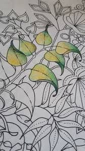 secret garden colouring book and pion for pencils bruynzeel sakura design pencils a review