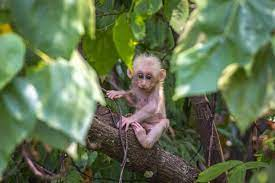 Monkey B Virus: Who are at Risk? Know Its Symptoms, Prevention, Treatment,  Cure And More