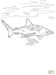 Small Picture Coloring Pages Animals Whale Shark Drawing Shark Coloring Page