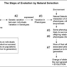 Flow Chart Evolution By Natural Selection Download