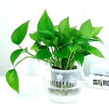 feng shui plant office. Plants For Office Desk Large Size Of Small Indoor Good Best Feng Shui Plant