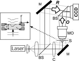 Digital holographic microscopy: a noninvasive contrast ... - OSA