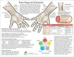 Peripheral Pulses Charting Pulse Diagnosis Chart 2nd Ed Clinical Charts And Supplies