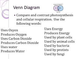 how do the equations of photosynthesis and cellular respiration