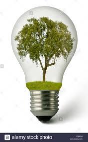 Light Bulb With Tree Inside Lightbulb With A Cork Oak Tree Growing Inside Conceptually