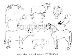 Animal Pictures Draw Stoughtonsoccer Info