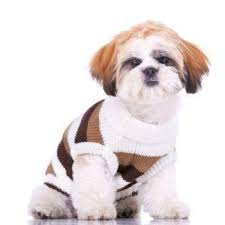 Cute Shih Tzu Puppy Weight Chart Yorkiepuppyweightchart