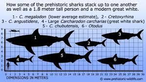 Shark Size Chart Are Sharks Today Capable Of Growing As Big As The