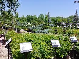 platt hill nursery 19 photos 34 reviews front yard back yard nurseries gardening 222 w lake st bloomingdale il phone number yelp