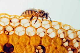 Propolis: How to Use Bee Propolis On Your Skin & What Are The ...