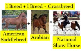 Crossbreeding Animals Definition Examples Study Com
