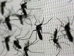 Resultado de imagem para RN tem 21 cidades em situação de alerta ou risco de surto de dengue, chikungunya e zika