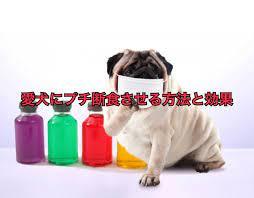 犬 下痢 食事