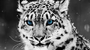 高画質かっこいい動物の壁紙画像まとめライオン狼鷹など