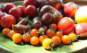 Au fost identificate genele care determină forma tomatelor!