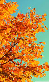 Fall Wallpaper Tumblr