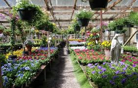 choosing a nursery local to you will make your gardening life a whole lot easier not only is it usually quicker and easier to get to but can also offer a