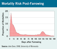 farrowing chart advancing sow lifetime productivity starts with why sows
