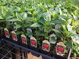as south jersey s top grower of usda certified organic vegetable and herb plants we grow almost 100 diffe items for your home garden including over 20
