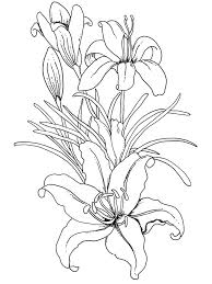 Small Picture 421 best flower coloring images on Pinterest Drawings Coloring