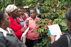 Image result for coffee farmer and consumers