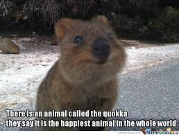 Quokka The Cute....love You So Much Baby by bemar.dayot - Meme Center via Relatably.com
