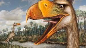 New species of 'terror bird' discovered   Science   AAAS