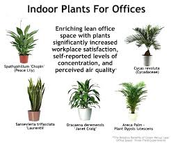plants for office space. simple office indoor plants for offices cbs office interiors berkshire best my  desk your small to space
