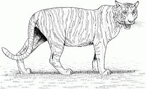 Small Picture Sabretooth Tiger Coloring Pages Of Realistic Coloring Coloring Pages