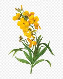 Floral Design Flower Botany Art Yellow Png 738x1024px