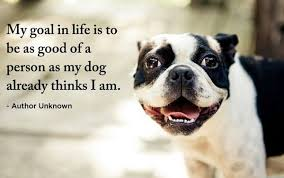 Quotes About Dogs Extraordinary 48 Funny Dog Quotes With Images Good Morning Quote