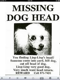 Missing Dog Poster Lost Pet Template 0 Allwaycarcare Com